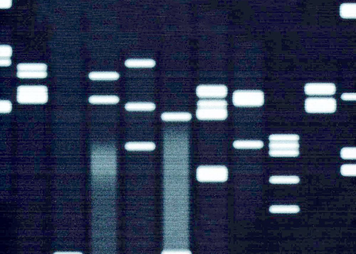 Manuela Monti e Carlo Alberto Redi, DNA. La vita in tre miliardi di lettere
