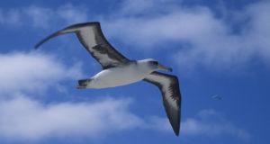 L'albatros, poesia di Charles Baudelaire