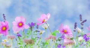 Frasi sulla primavera che amerai