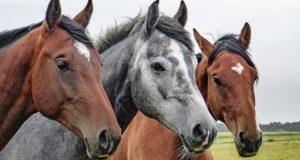 Frasi dedicate ai cavalli