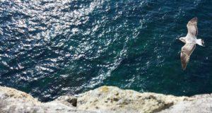 Le più belle frasi sul mare di autori famosi