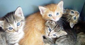 Le più belle frasi sui gatti