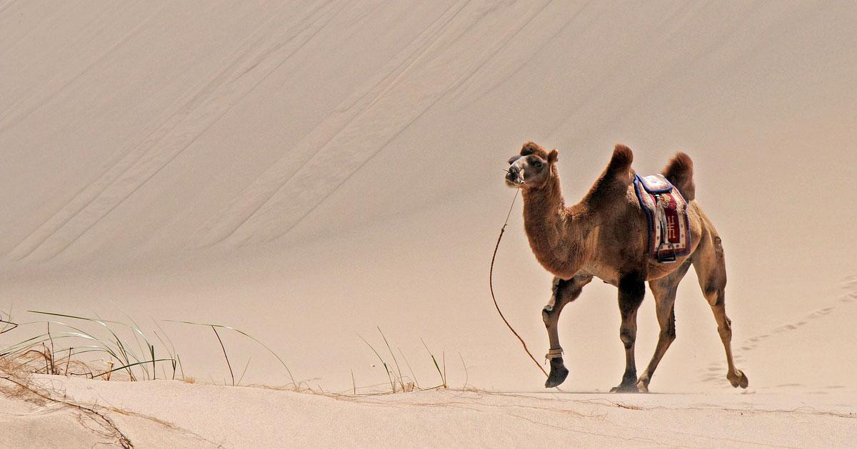 Cammello e Camel Case