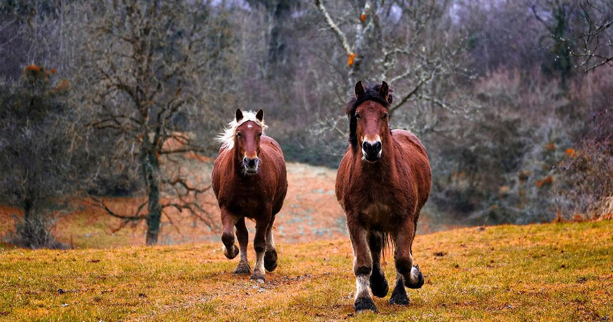 Le più belle poesie dedicate ai cavalli