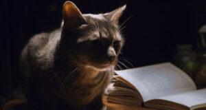 Scrittori e scrittrici amanti dei gatti