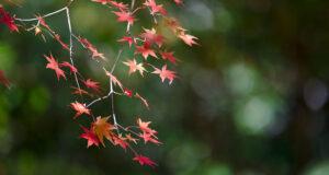 I parchi più belli d'autunno e i libri che te li fanno amare
