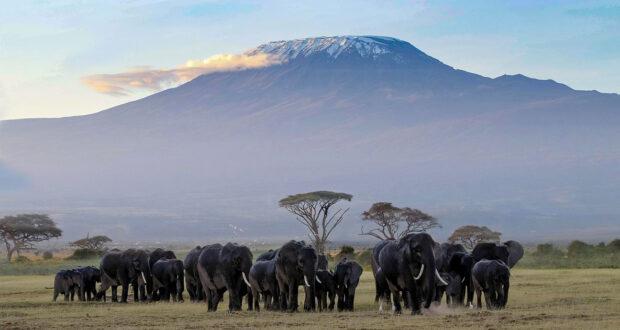 Romanzi ambientati in Africa